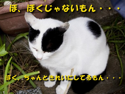 猫ひっかき病
